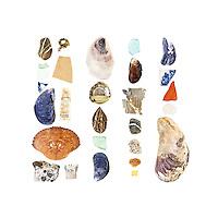Beach stones, sea glass, Northern Rock Barnacle (Semibalanus balanoides), pottery shards, Blue Mussels (Mytilus edulis), plastic plant tag, Rock Crab (Cancer irroratus), manmade aggregate, plastic shotgun wadding, Atlantic Oyster (Crassostrea virginica), aluminum bottle top, unidentified seed, freshwater mussel?, duct tape, styrofoam, Green Crab (Carcinus maenas), plastic fragment, mutated Blue Mussel, sea brick, and Horse Mussel (Modiolus modiolus).