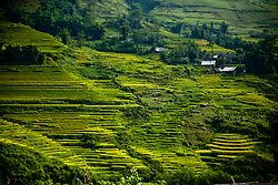 Rice paddy fields landscape in Sapa, Lao Cai Province, Vietnam, Southeast Asia.