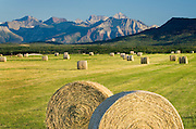 Bales of hay  in filed near Waterton Lakes National Park Alberta Canada