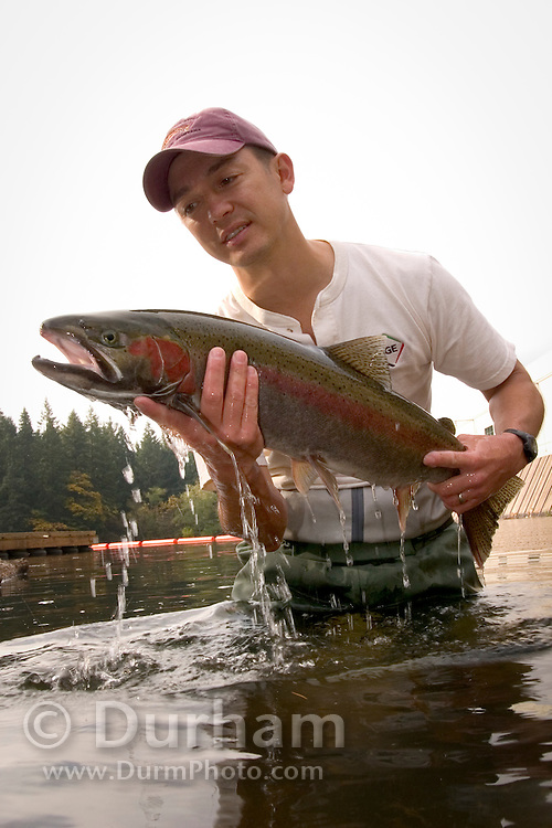 Portland General Electric fish biologist Tim Shibahara holds a steelhead trout (Oncorhynchus mykiss) before releasing it into the forebay of Faraday Dam.