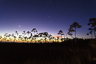Night view of a silhouetted grove of slash pine trees near the Mahogany Hammock section of Everglades National Park, Florida.<br /> <br /> WATERMARKS WILL NOT APPEAR ON PRINTS OR LICENSED IMAGES.