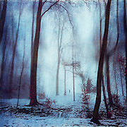 Lonely walker in a wintry park - manipulated and texturized photograph