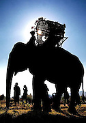 An mahout with his elephant during the Elephant Asia festival in Hongsa, Laos.