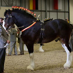 Shire Horse Society Spring Show 2010