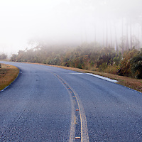 A paved road curves into the distance on a foggy morning in Everglades National Park, Florida.