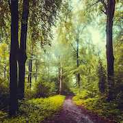 Path through a misty forest in morning light<br /> Society6 products: http://bit.ly/2fTOAxS<br /> Redbubble products: http://rdbl.co/2fBzM3S