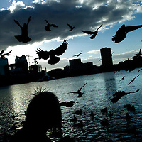 ORLANDO, FL -- January 30, 2008 -- Keri Sundin of Orlando watches as hundreds of pigeons land around her at Lake Eola Park in Orlando, Fla., on Friday, January 27, 2006.  The popular park was developed during the citrus industry boom in the 19th century and offers a tranquil haven set against the city's downtown to paddle around the floating fountain or jog the lake's perimeter.