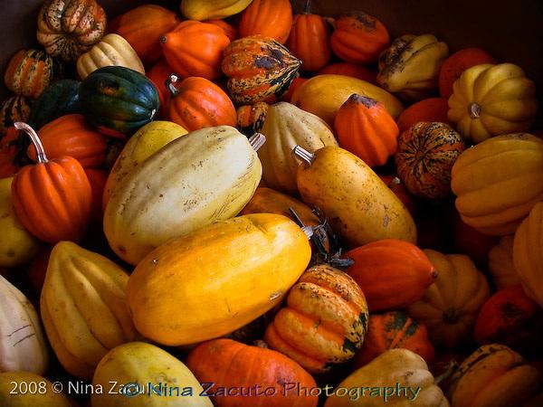 Pumpkins, gourds, squash