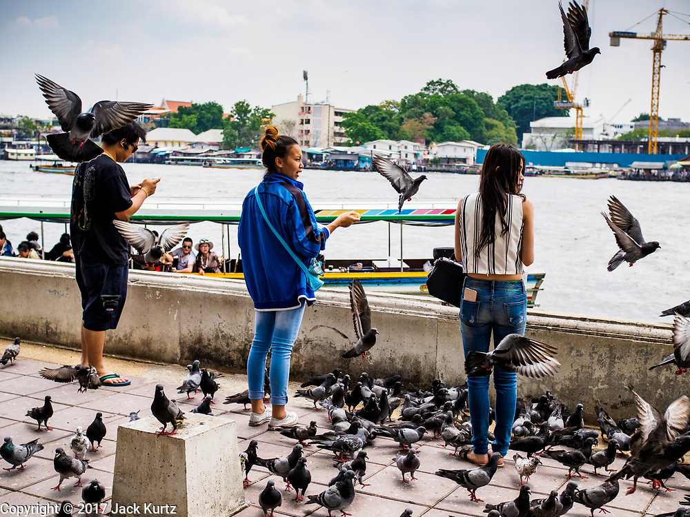 04 ARIL 2017 - BANGKOK, THAILAND: People feed pigeons to make merit at Wat Rakhang. Wat Rakhang Khositaram, formerly known as Wat Bang Wa Yai, is an Ayutthaya period temple.  During the Thon Buri period, the temple was reconstructed and upgraded as a royal temple by King Taksin the Great who ordered the construction of a palace in the area.       PHOTO BY JACK KURTZ