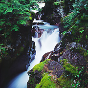 Montana: Glacier NP: Lake McDonald, Avalanche Lake & Gorge