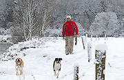 1/12/2010.David McCormick picture out walking in the snow with his dogs on the banks of the river Nore in Kilkenny yesterday..Picture Dylan Vaughan