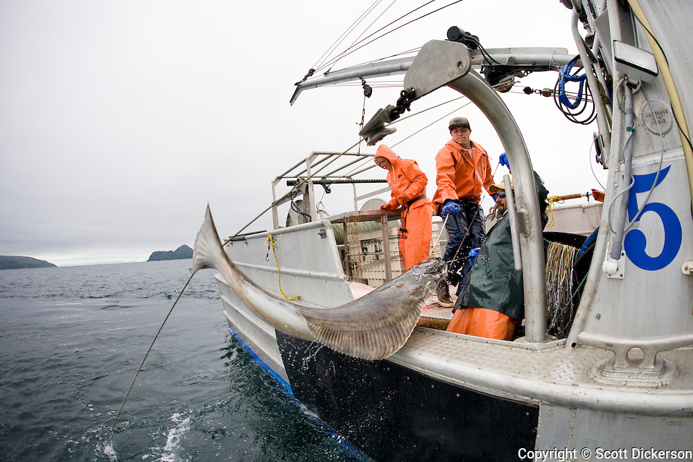 Commercial halibut fishing scott dickerson for Commercial fishing gear