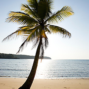 Palm tree on a sandy beach