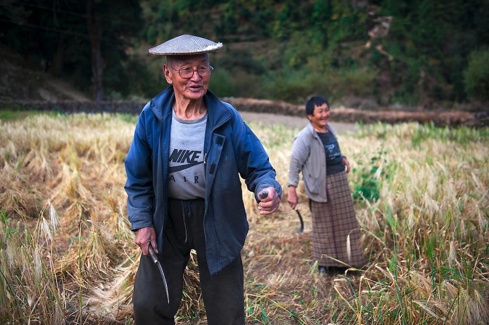 Farmers harvesting buckwheat in rural Bhutan.