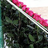 South America, Ecuador, Cayambe. Long Stem Roses in rack at Rosadex Rose Plantation.