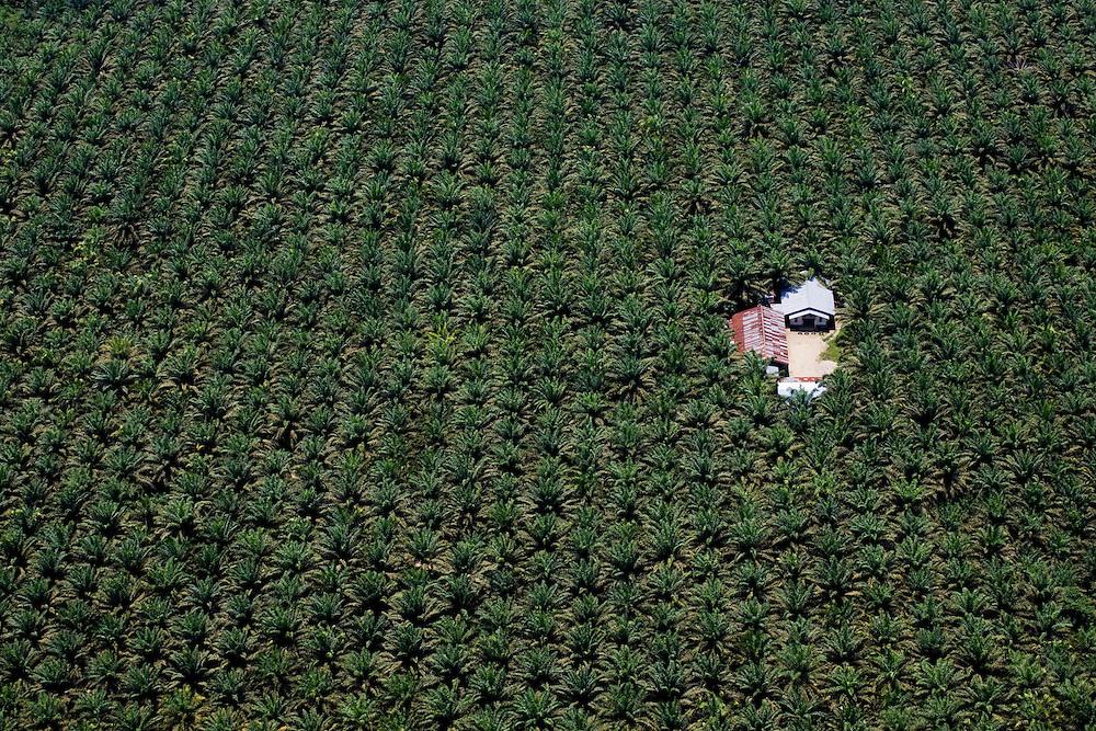 Vast expanses of palm oil plantations east of Pekanbaru, Sumatra, Indonesia, Aug. 30, 2008..Daniel Beltra/Greenpeace