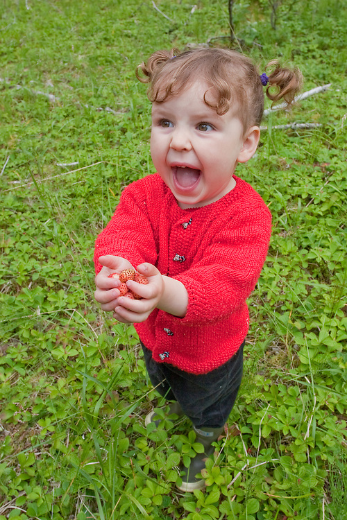 A very cute and excited little girl wearing a red sweater holds onto as many wild strawberries as she can. MR MRA