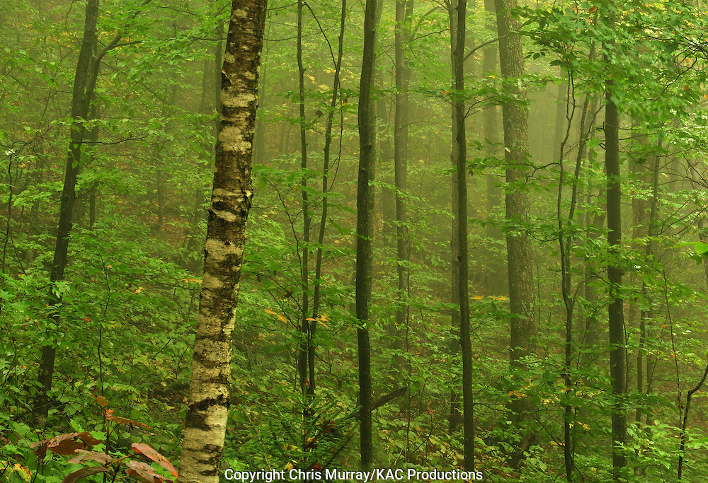 Misty forest, Adirondack Park, New York, USA