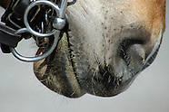 HORSE & PONY