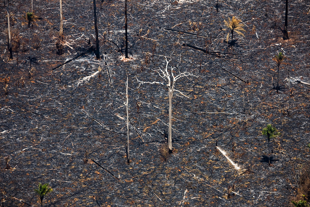 Remnants of Amazon rainforest which has been  cleared for cattle ranching at the Joao Soares Fazenda in Sao Felix Do Xingu municipality, in Para State, Brazil, August 13, 2008..Daniel Beltra/Greenpeace