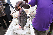 MWANZA, TANZANIA.  A fisherman shows off a fresh tilapia at an outdoor market on the shore of Lake Victoria in Mwanza, Tanzania on Thursday, September 4, 2014. © Chet Gordon/THE IMAGE WORKS