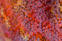 Sea Star Closeup
