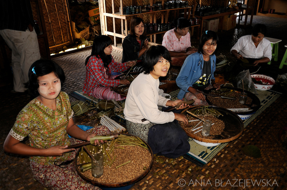 Burma/Myanmar, Inle Lake. Workshop, where girls are making burmese cigars - cheroots.