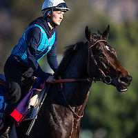Romantica trains for the Breeders' Cup Fillies and Mare Turf at Santa Anita Park in Arcadia, California on October 31, 2013. (Alex Evers/ Eclipse Sportswire)