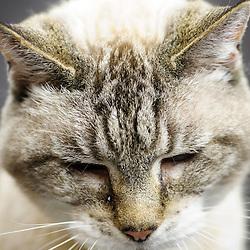 Sophie Price - Cat