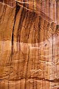 Desert varnish has stained the sandstone walls of a canyon in Capitol Reef National Park.