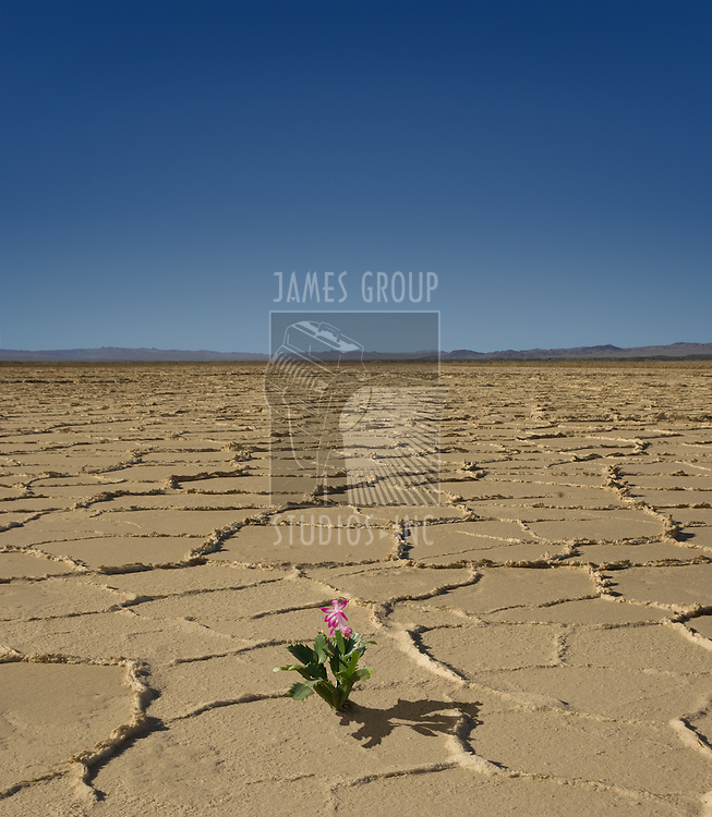 Small flowering plant in the middle of a desert wasteland
