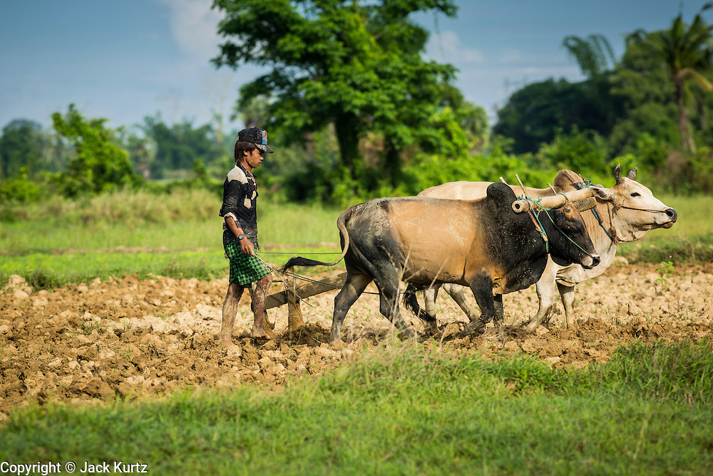 06 JUNE 2014 - IRRAWADDY DELTA,  AYEYARWADY REGION, MYANMAR: A farmer uses oxen to plow a rice field Irrawaddy Delta (or Ayeyarwady Delta) in Myanmar. The region is Myanmar's largest rice producer, so its infrastructure of road transportation has been greatly developed during the 1990s and 2000s. Two thirds of the total arable land is under rice cultivation with a yield of about 2,000-2,500 kg per hectare. FIshing and aquaculture are also important economically. Because of the number of rivers and canals that crisscross the Delta, steamship service is widely available.   PHOTO BY JACK KURTZ