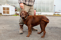 CoCo the VanScoy farm dog. VanScoy Farms Ridgeview, Ohio.(Jodi Miller)