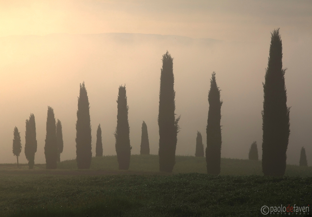 a line of cypress tress aligned along a country road atop a hill in the Orcia Valley nearby San Quirico d'Orcia, Tuscany, Italy. Taken on a very foggy morning at the end of Aprils, moments after sunrise.