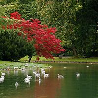 Europe, Germany, Munich.  Englischer Garten, or English Garden of Munich.