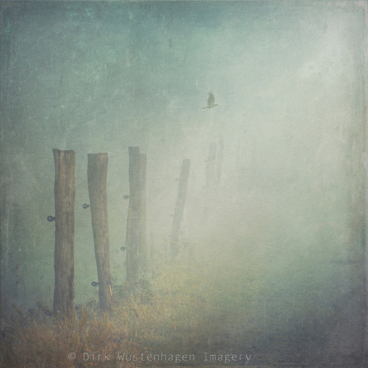 Rural path on a foggy day.<br />