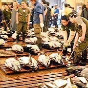 TOKIO Fresh Tuna Auction