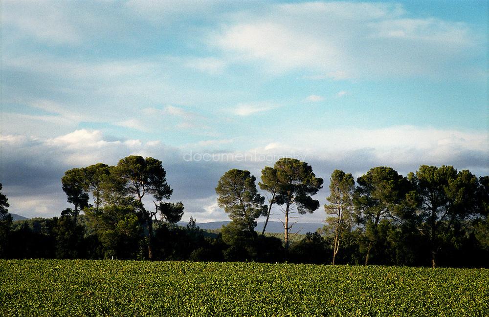 Bernard Teilland, homme d'affaire et amateur d'art, acceuille chaque année une exposition sur ses terres, ici les vignes du Chateau Sainte Roseline, Les Arcs-sur-Argens, France