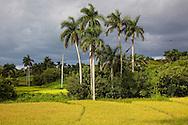 Landscape, El Moncada, Pinar del Rio, Cuba.