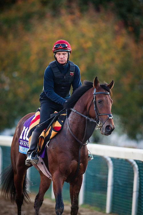 October 29, 2015:   Waterloo Bridge (IRE), trained by Aidan P. O'Brien and owned by Derrick Smith, Mrs. John Magnier & Michael Tabor, exercises in preparation for the Breeders' Cup Juvenile Turf at Keeneland Race Track in Lexington, Kentucky. Alex Evers/ESW/CSM