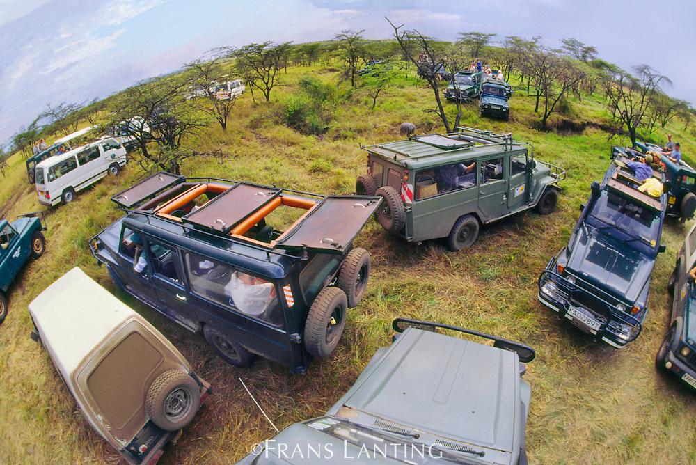 Safari vehicles surrounding leopard, Masai Mara Reserve, Kenya