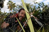 Silver Argiope (Argiope argenta)and frightened onlooker, Miami, Florida, USA