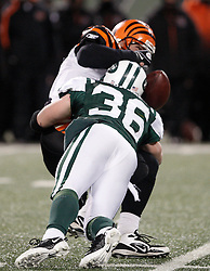 Jan 3, 2010; East Rutherford, NJ, USA; New York Jets safety Jim Leonhard (36) sacks Cincinnati Bengals quarterback J.T. O'Sullivan (4) and forces a fumble during the second half at Giants Stadium. The Jets clinched a playoff spot with a 37-0 win over the Bengals.