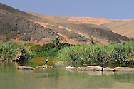 Kunene River, Serra Cafema Camp, Wilderness Safaris, Kaokoland, Kunene Region, Namibia