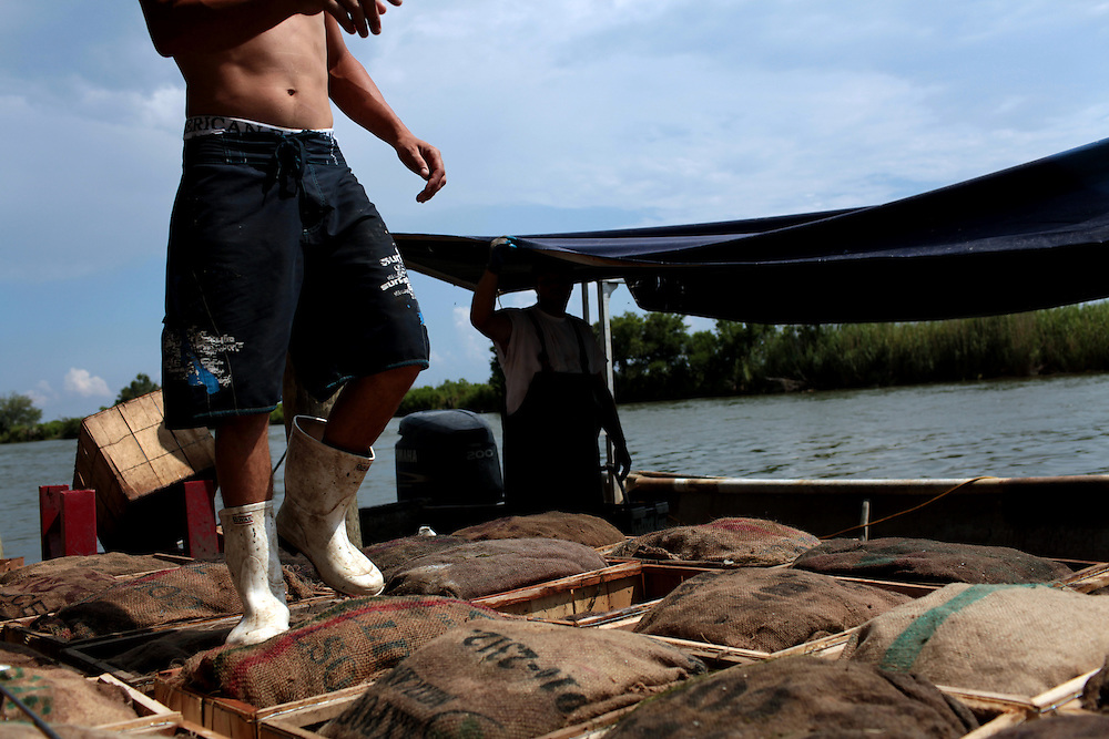 Jason Melerine counts his catch of blue crab waiting to be sorted on Delacroix Island in St Bernard Parish, LA on May 25th, 2010. Local fisherman from St Bernard Parish were desperately fishing the surrounding bayou to earn as much income as possible before authorities shut down the crab fishing while the BP oil spill inched closer.