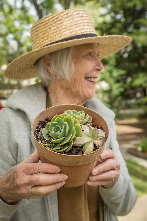Volunteer Pat Haynes arranges plants at the Calistoga Garden Club annual yard sale on Washington Street in Calistoga.