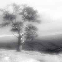 PL12005-00...NORTH CAROLINA - Pinhole image of a tree on top of Stone Mountain in Stone Mountain State Park.