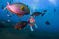 Indo-Pacific images by Tim Rock