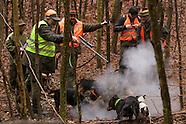 Wild boar hunt in Slovakia