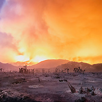 Smoldering remains of Joshua Trees, Yuccas, and other desert plants dot the moonlit landscape of rural San Bernardino County after being completely burned over by the Blue Cut Fire in August, 2016. The fire continues to burn in the mountains in the San Bernardino National Forest. Red Flag fire weather conditions lead to dangerous rates of fire spread on the fire earlier in the day. <br /> <br /> The Blue Cut Fire burns in and around the San Bernardino National Forest in San Bernardino, CA August 16th, 2016.